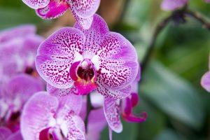 beautiful-bloom-blooming-1047814