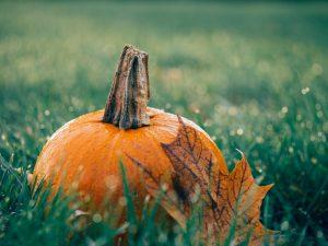 pumpkin-1030817_1920
